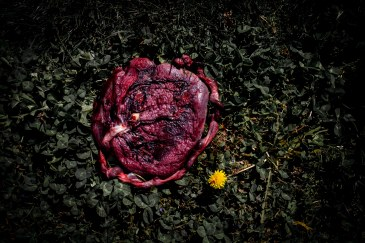 placenta laying in grass with flower